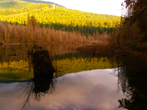 Reflections and lines found in Buntzen Lake, BC.