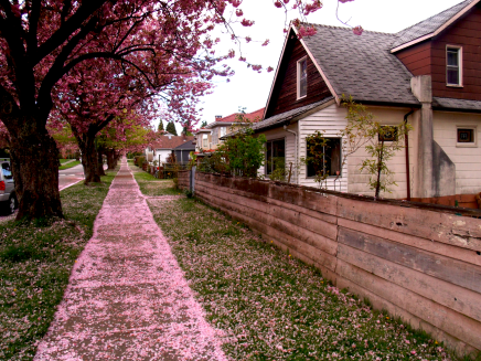 follow the cherry blossom trail