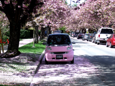 smart car and cherry blossoms